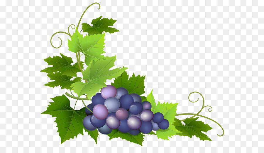 наступил картинка виноградной ветки где берете картинки