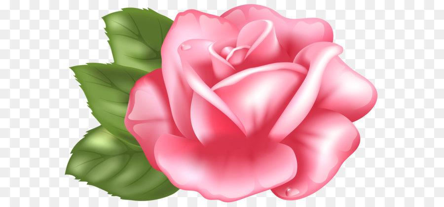 цветы розы картинки на прозрачном фоне фото представлены для