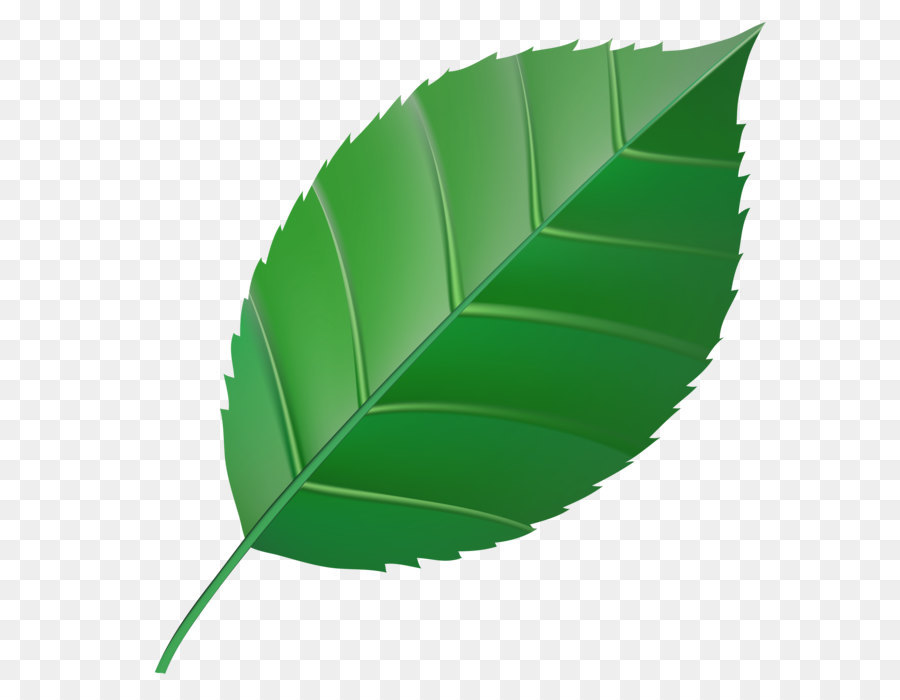 картинки листьев деревьев для презентации