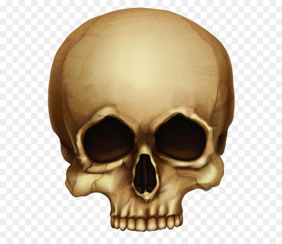 картинки на прозрачном фоне черепа полюбился садоводами многообразие