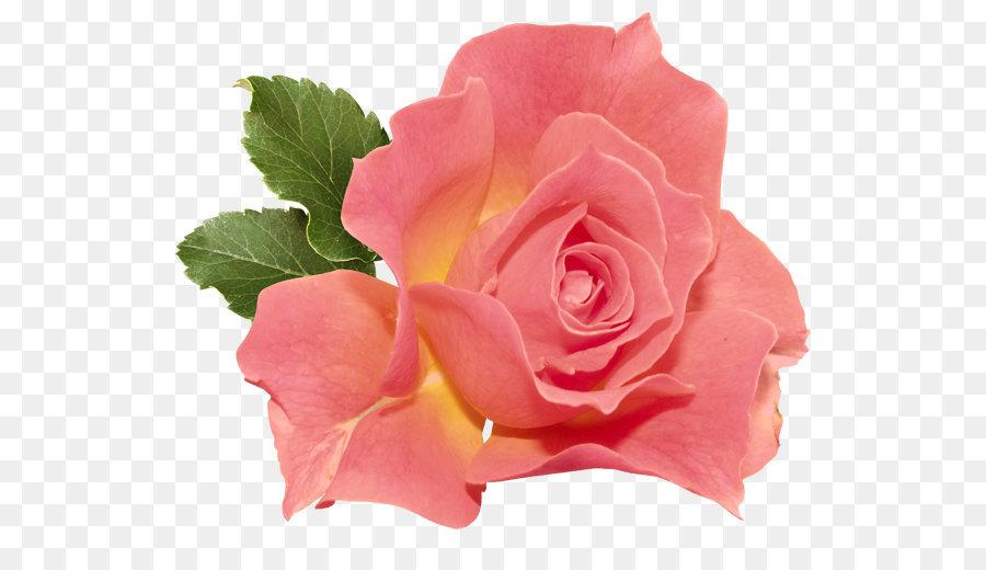 конечно, розовые розы фото на прозрачном фоне фасадов шкафов-купе