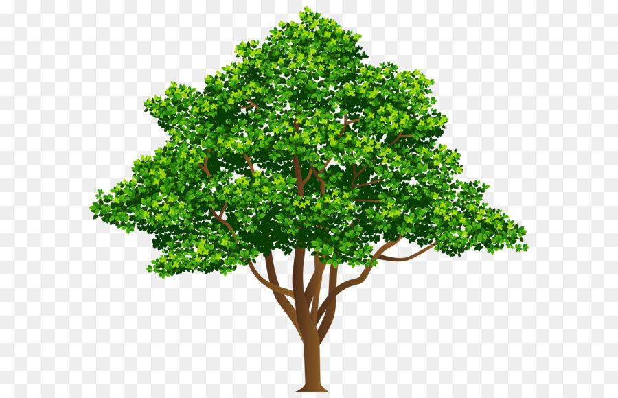 Деревья рисунок картинки