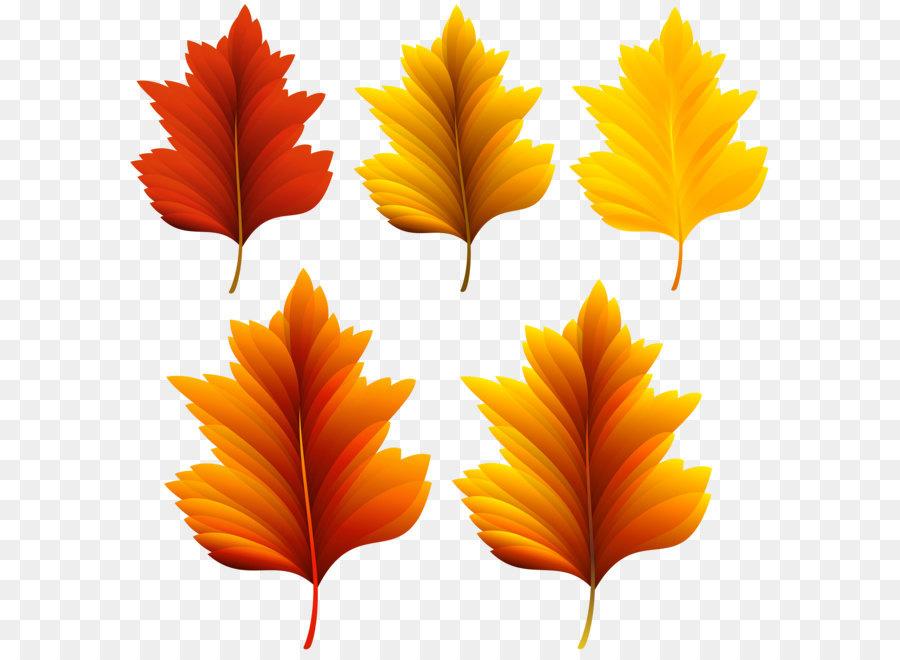 картинки осенних листиков деревьев фиксирует запись