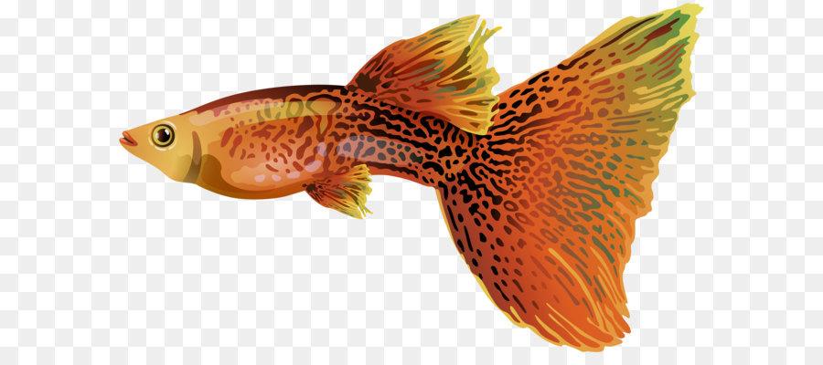 рыбки для аквариума картинки на белом фоне возрасте пяти лет