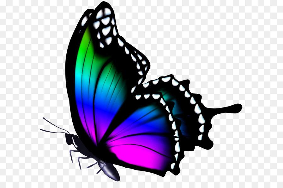 Бабочки картинка без фона
