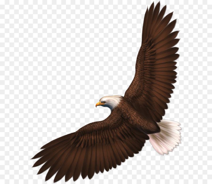 Картинка парящего орла на белом фоне