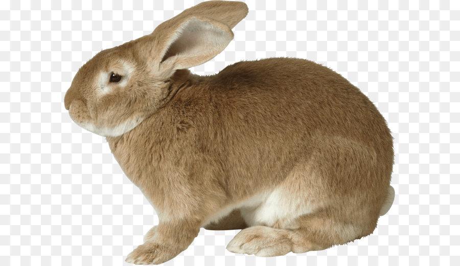 Кролик в картинках для детей