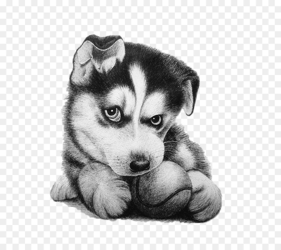 Рисунки милых собак карандашом