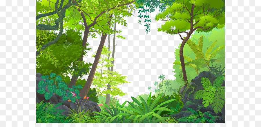 джунгли,