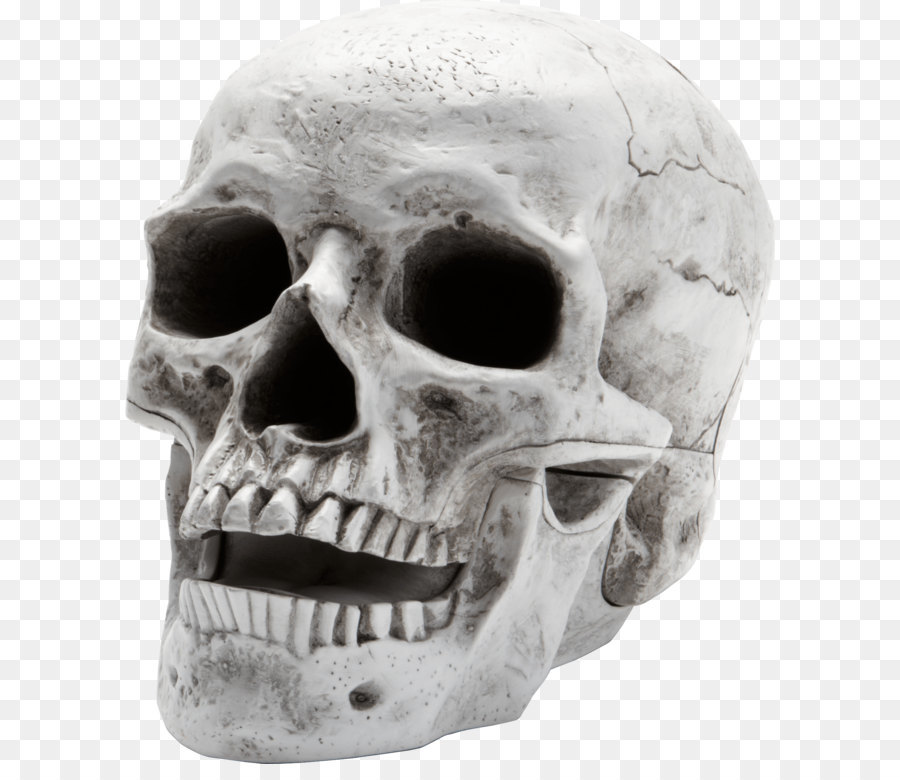 бьюти картинки на прозрачном фоне черепа серебряных сережек опалом