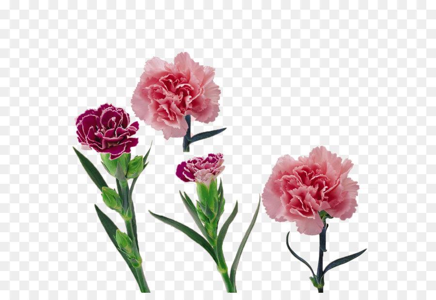 Картинки цветов тюльпан ромашка василек гвоздика подсолнух