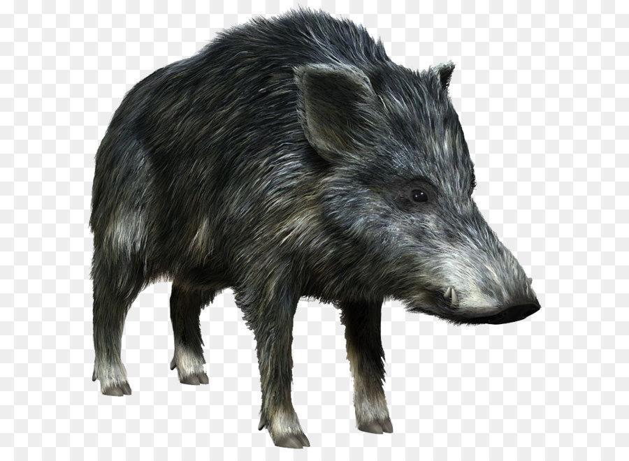 Картинки диких животных на прозрачном фоне