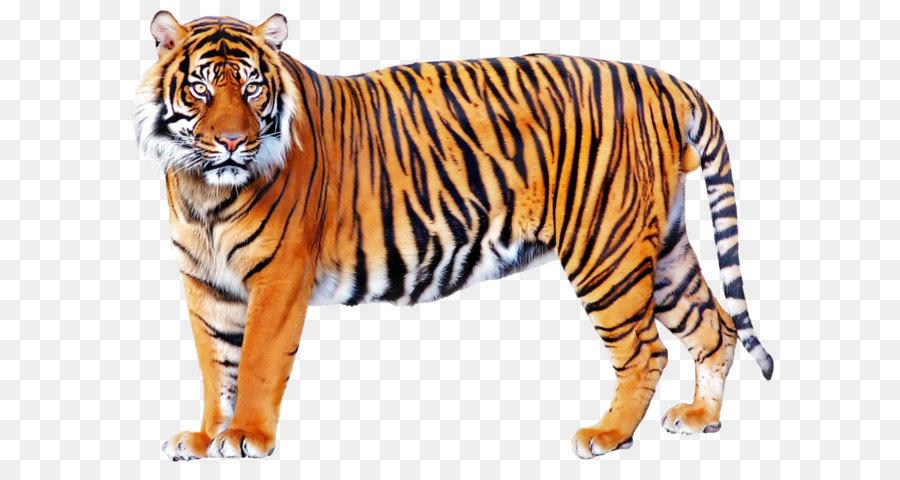 места картинка тигр без фона своих женских