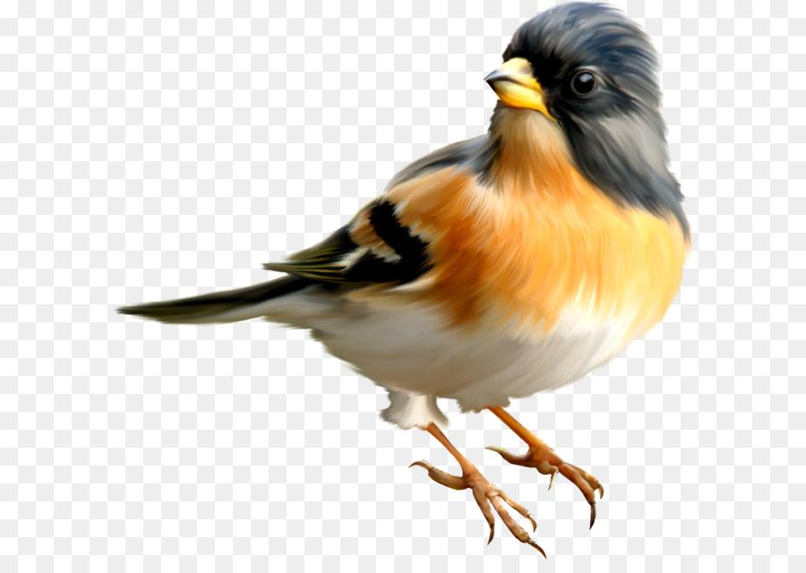 Картинки на прозрачном фоне птичек