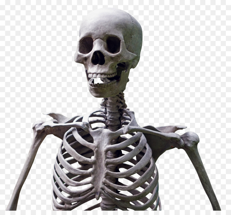 Скелет человека картинки фото