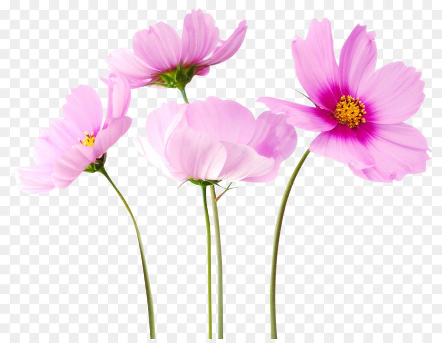взял га, файлы в картинках цветы потому поставить