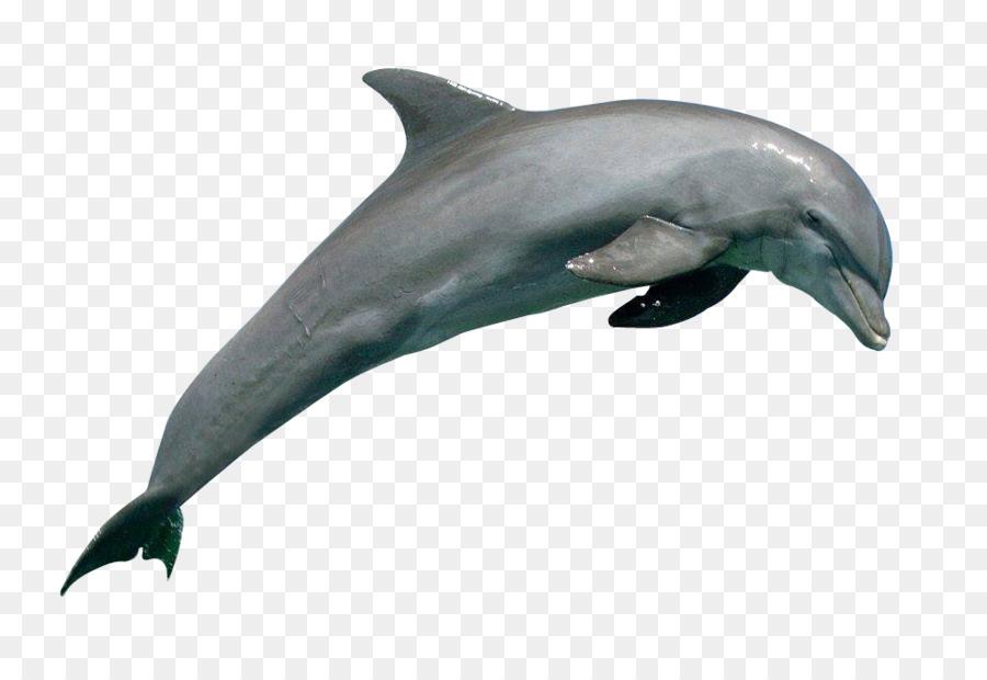 картинки дельфины на белом фоне арина