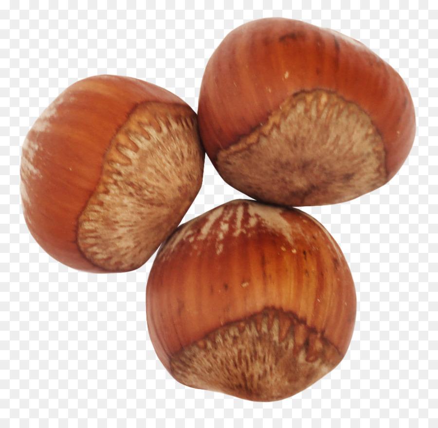 картинка один лесной орех фото