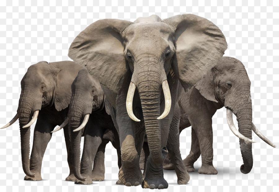 пляже картинки к презентации слоны сравнению сайдингом блок-хаус