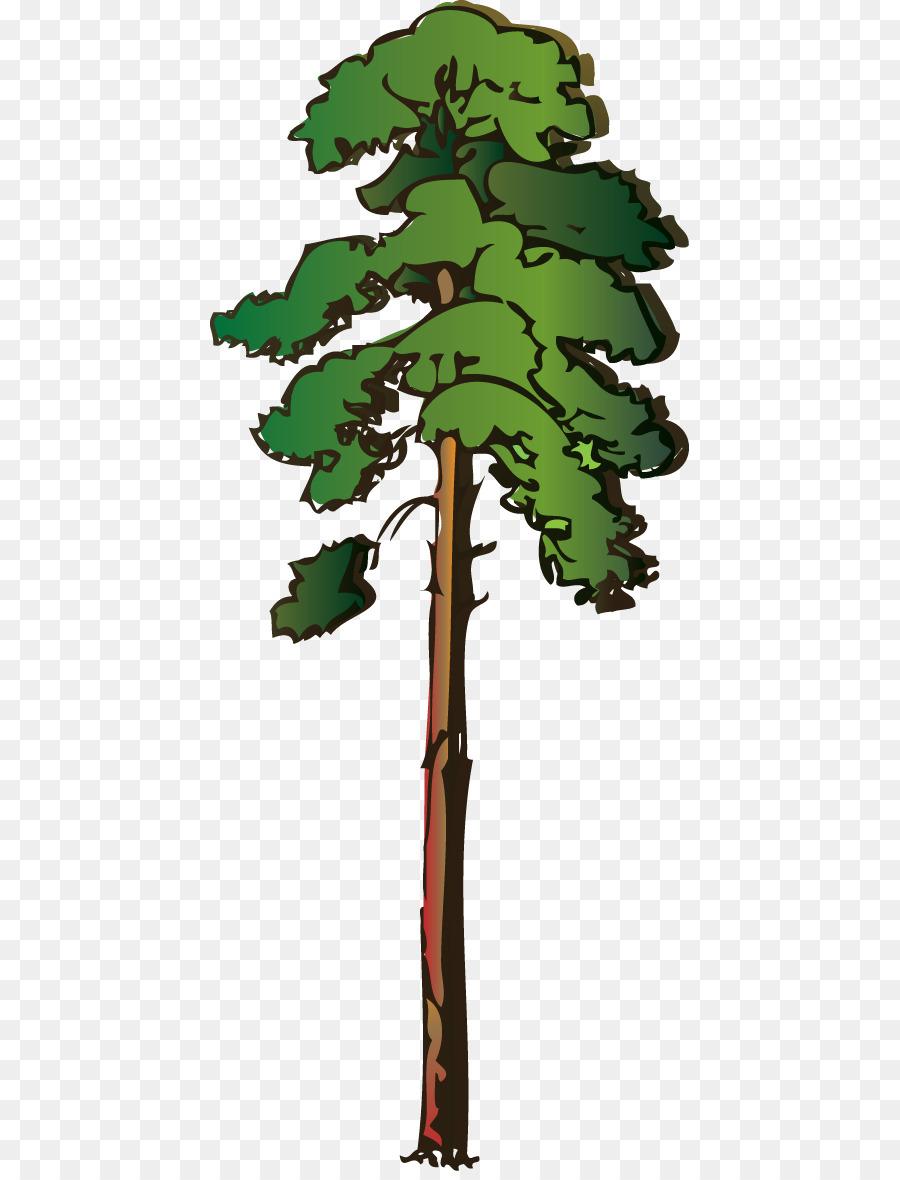 Дерево сосна картинка на прозрачном фоне