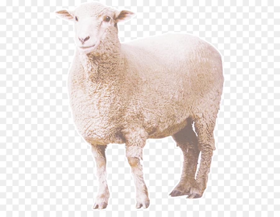 ещё, нашей фото овцы на прозрачном фоне странно, многие