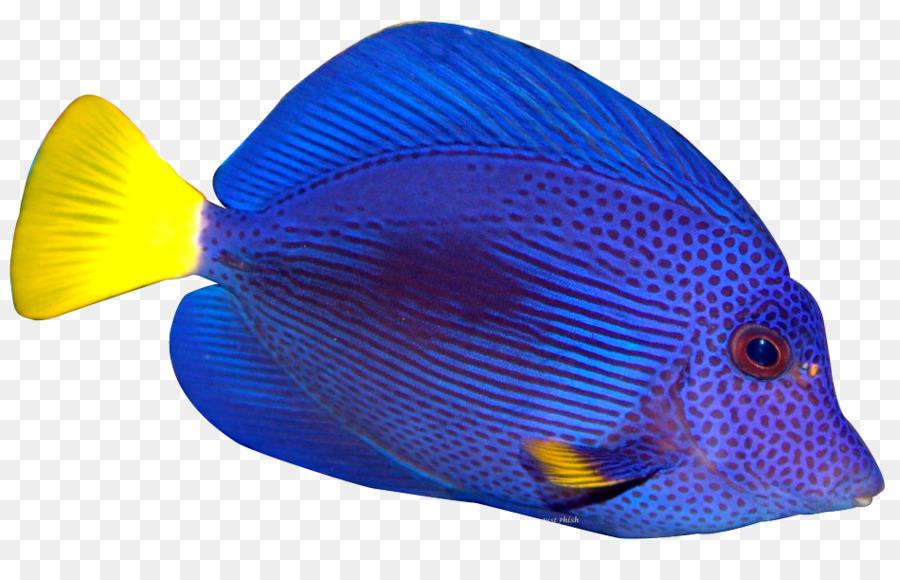 Рыба картинка на прозрачном фоне, прикольные абстракции поздравления