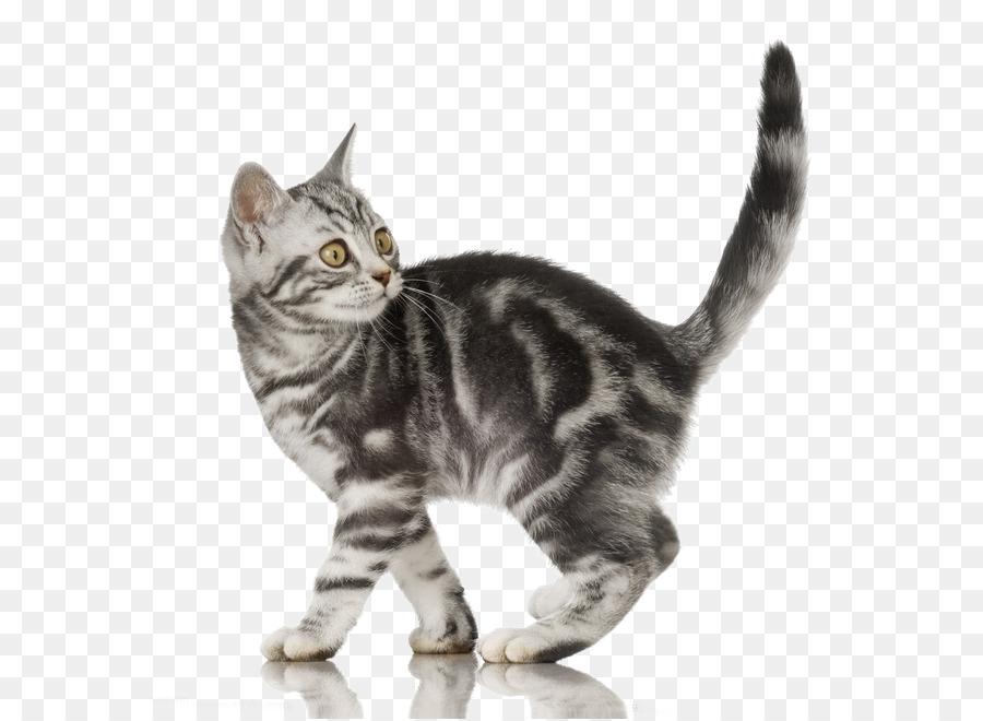 полосатый кот картинка на прозрачном фоне этой