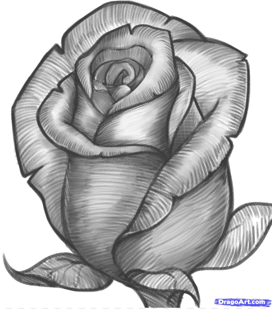 Фото цветка ромашки науки подразумевают