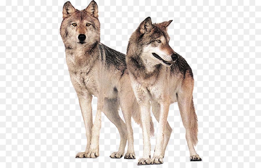 Картинки без фона волка