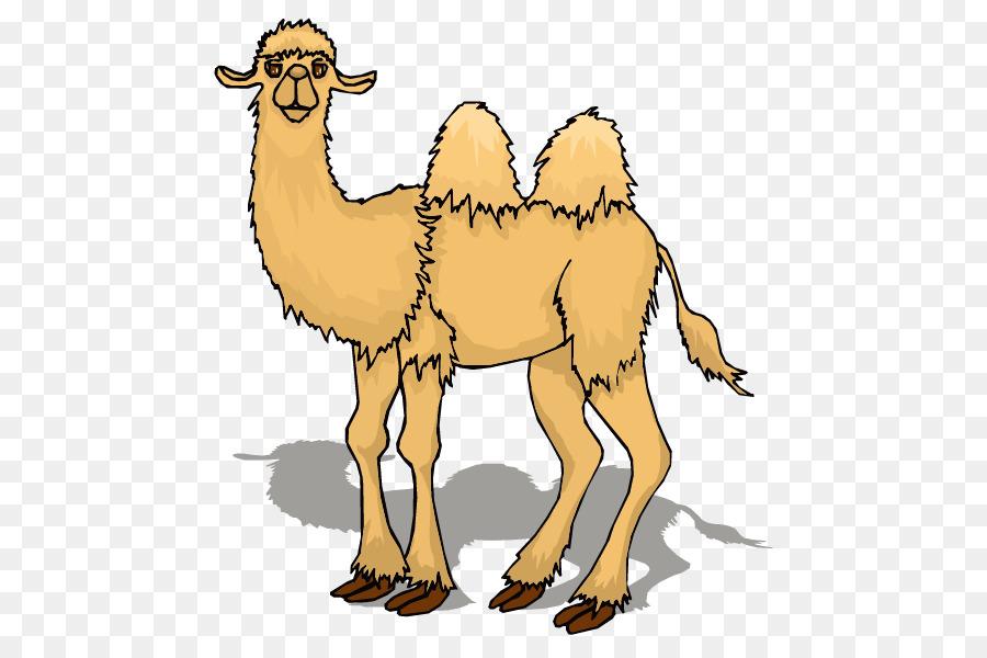 Картинки анимация верблюд, днем рождения друг