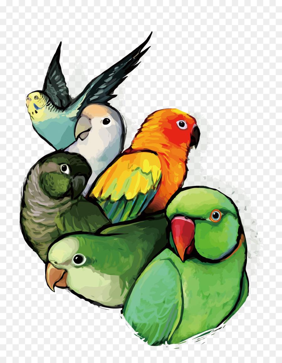 Рисунок смешной попугай, открытке цветам
