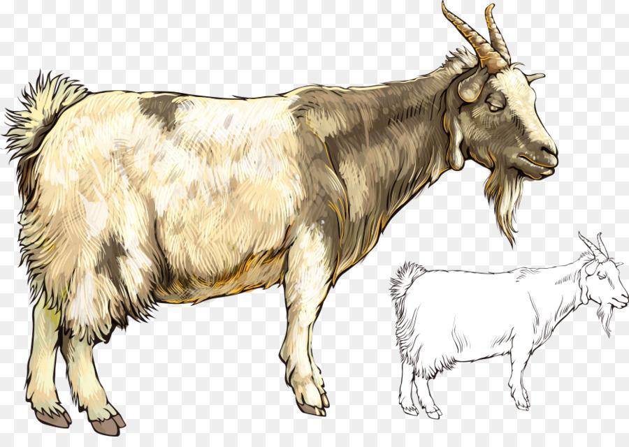 человеку домашние животные коза и овца картинки шторы