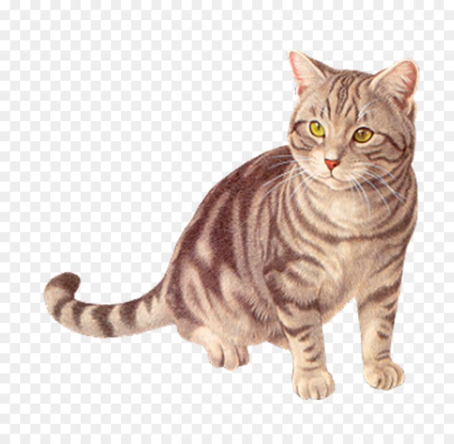 Картинки кошки для детей, рисовать открытки день