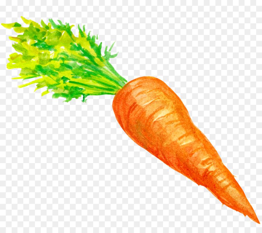 Картинки овоща морковки
