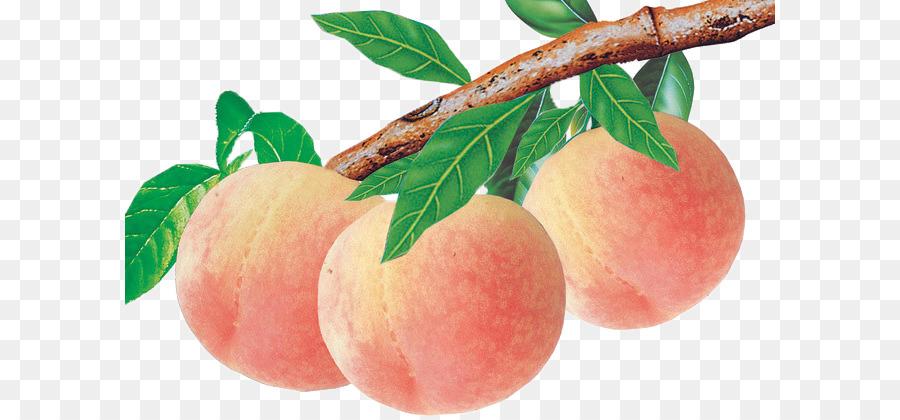 Ветви персика с иллюстрациями подспорьем