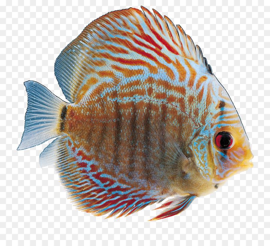 фото морских рыб на прозрачном фоне идеи