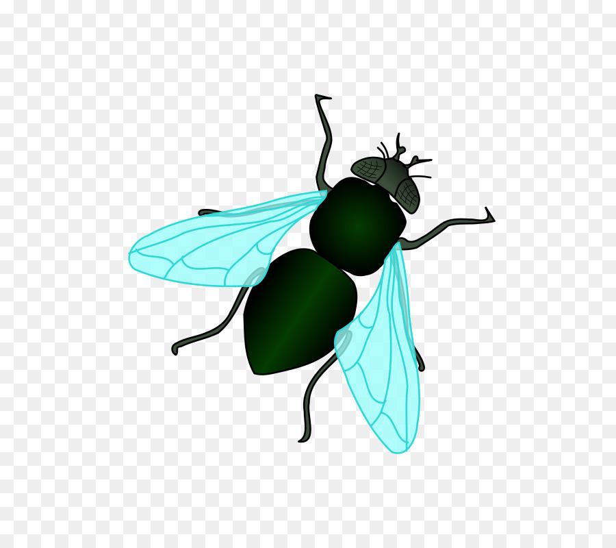 Картинка муха для детей на прозрачном фоне