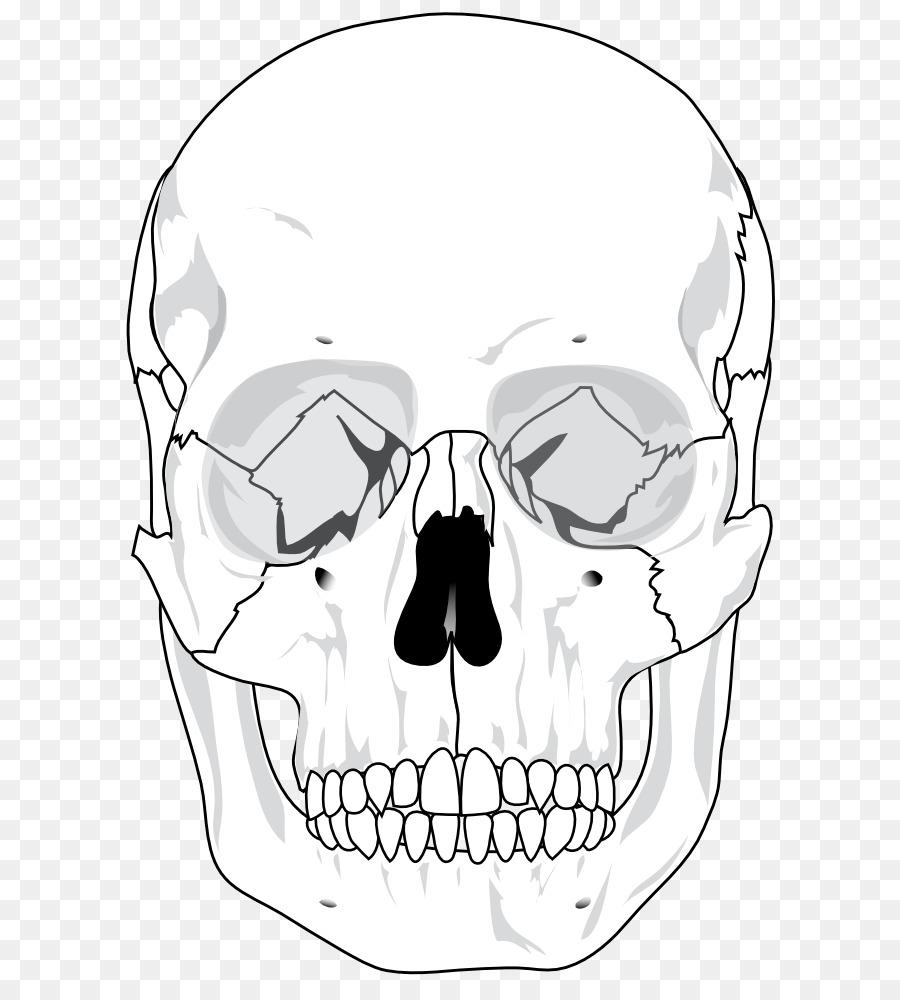 картинка кости лица тойота чайзер