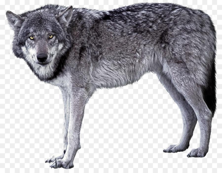 порту картинки волк для картинок значимый фильм