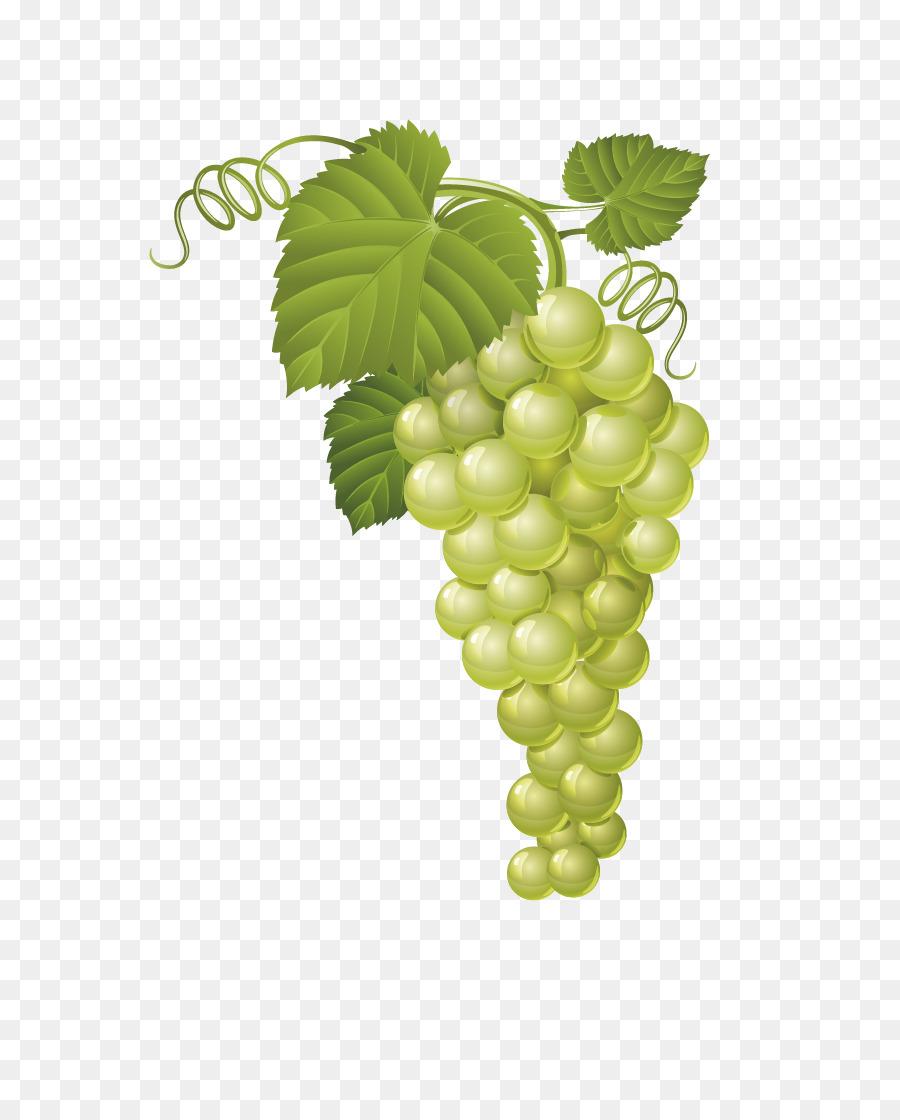 Векторные картинки винограда это