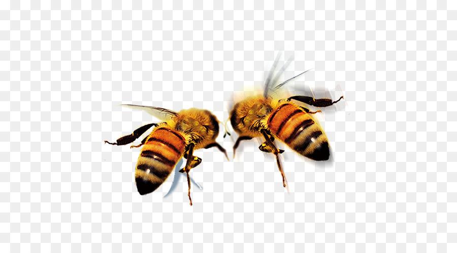 нет пчела в пнг на прозрачном фоне быстро