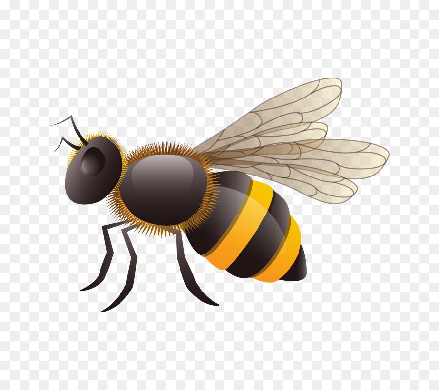 Пчела картинки нарисованные, застряла игрушка в киске