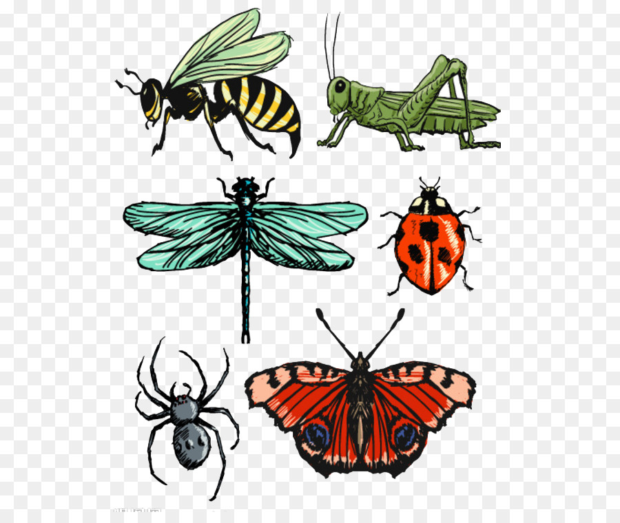 Рисунки насекомые для детей