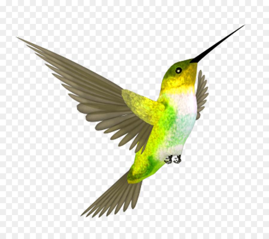 Картинка для детей колибри