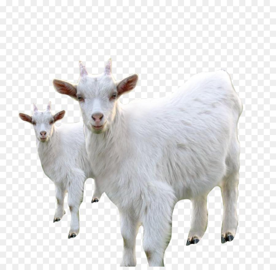 Картинка для детей на белом фоне коза