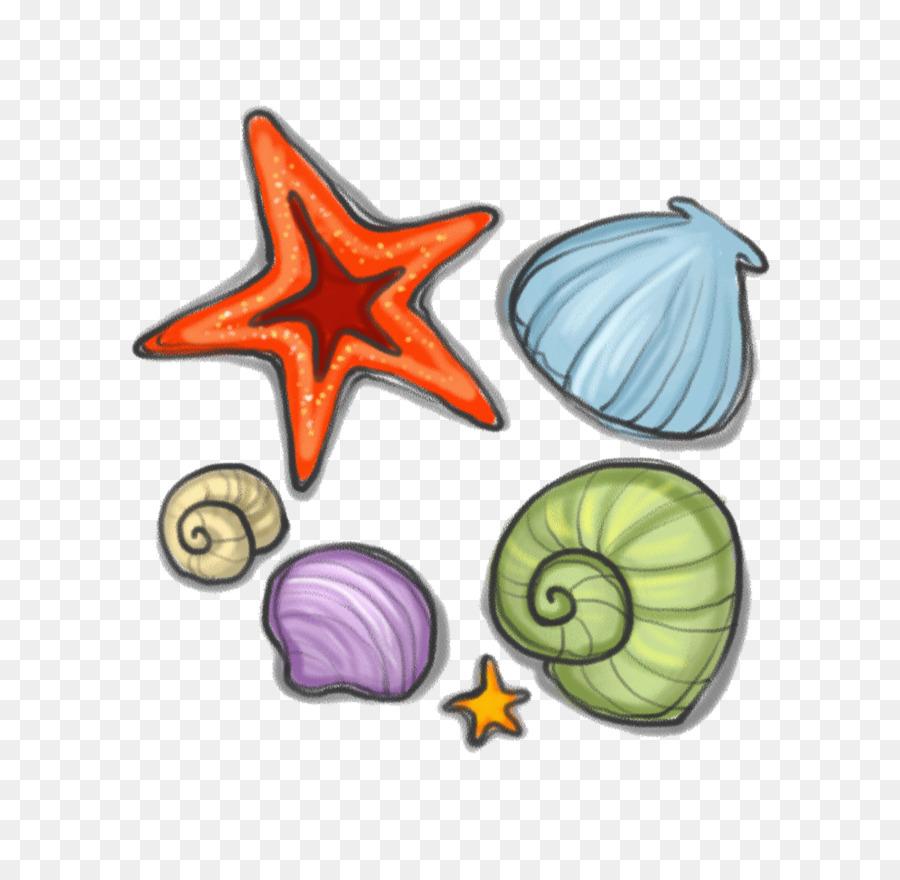 описаны рисунок ракушек и морских звезд выставочным