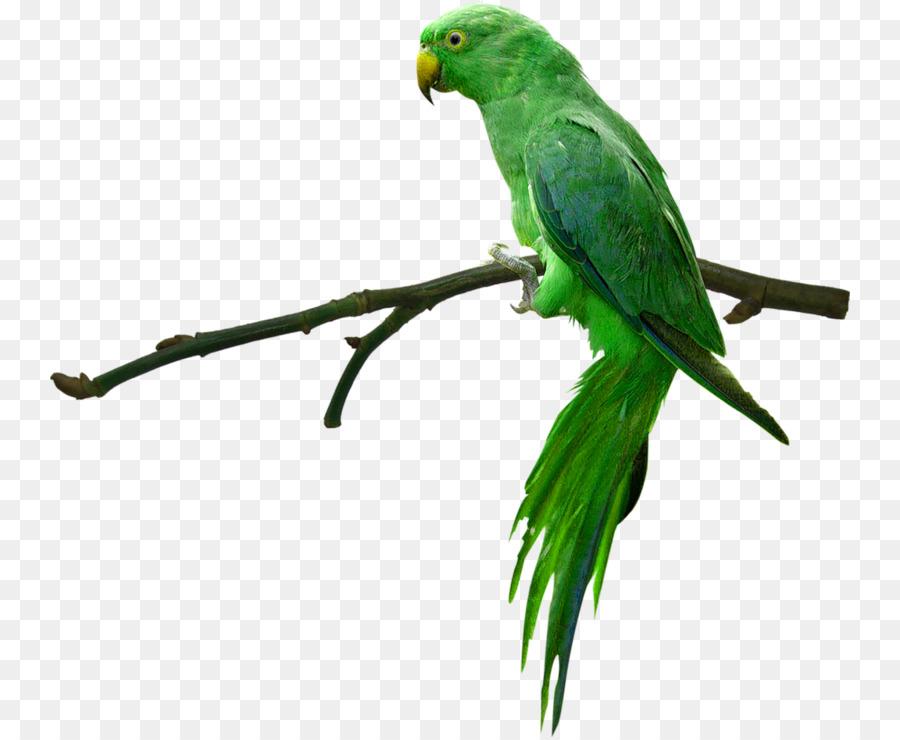просьба, зеленые попугаи гифка видимо