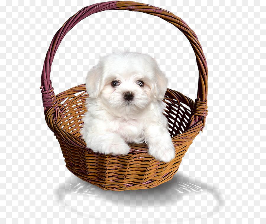 Корзина для собаки картинки