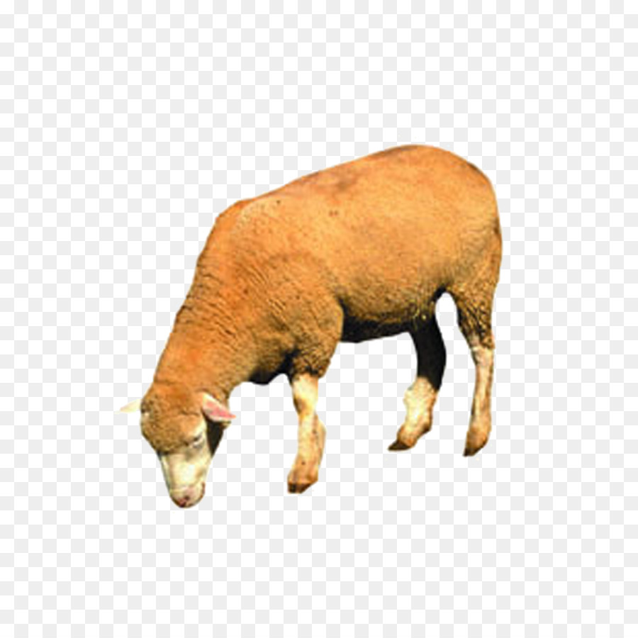 Картинки с раскрасками животные этот