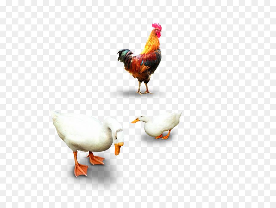 этом картинка курицы гуся утки модельеры